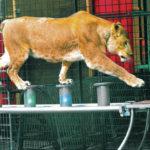 Erlebnispark-tigert-in-die-neue-Saison_pdaArticleWide