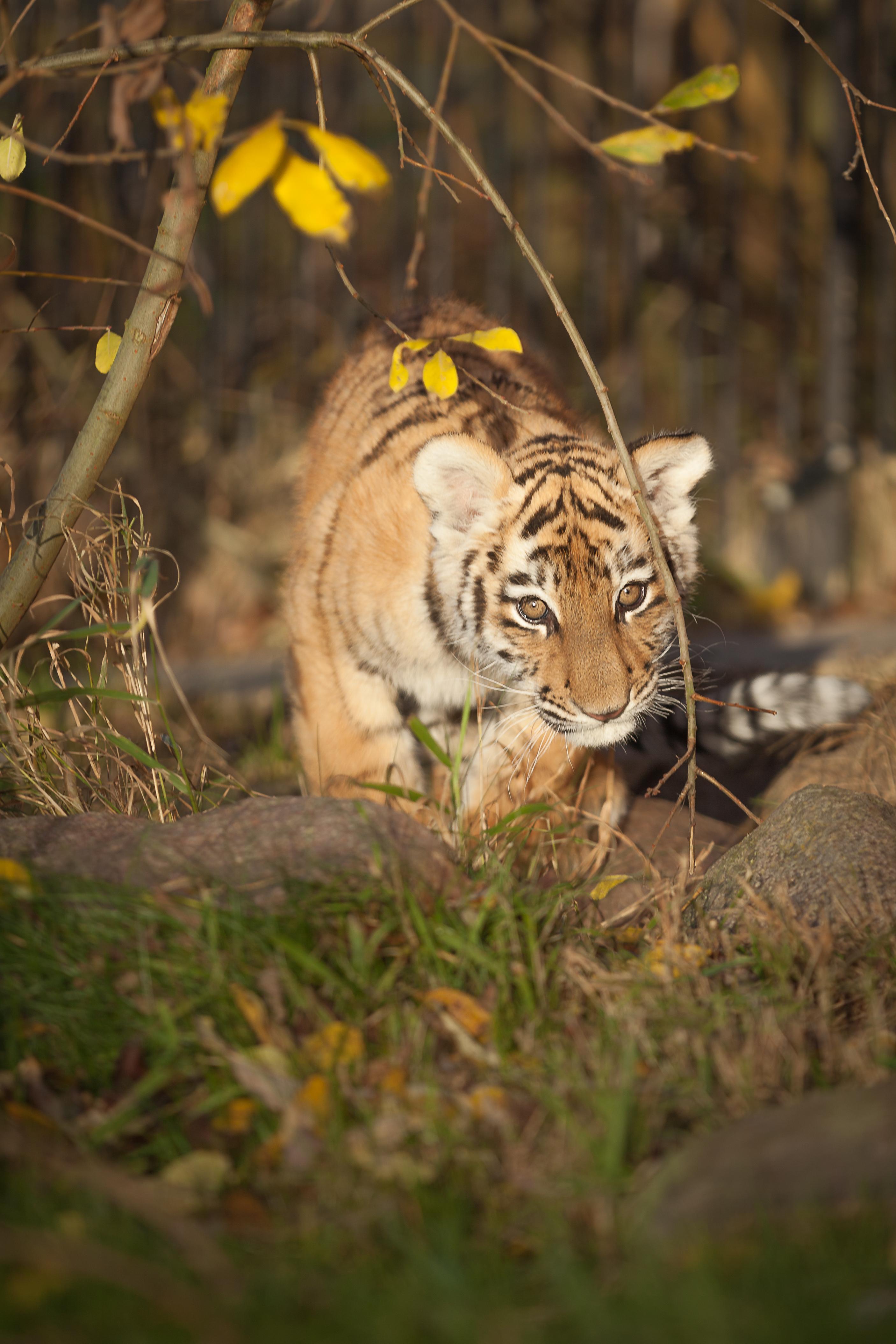 Foto: Gerald Pfaff (www.baer-tiger.com)